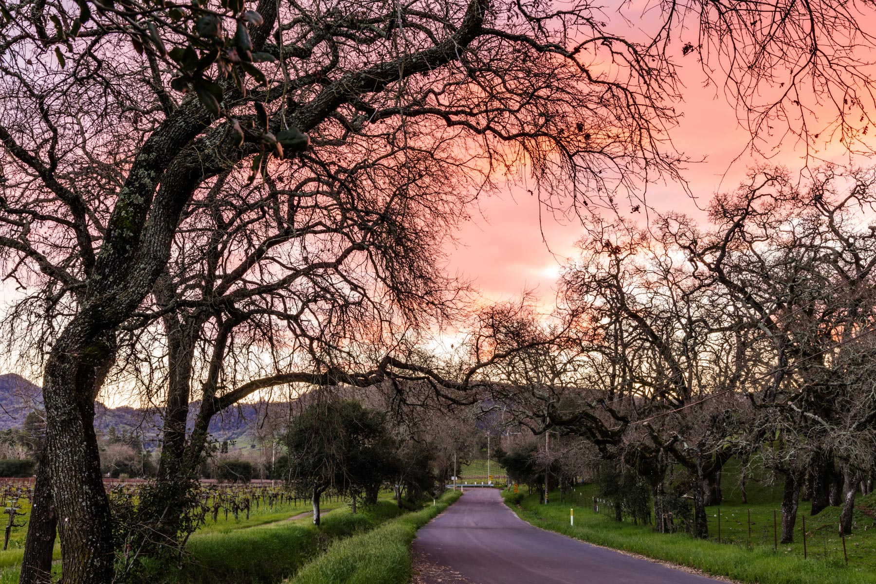 napa_valley_road_1702-19