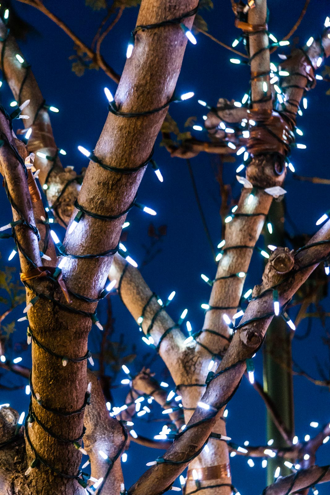 tree_of_lights_200705-16